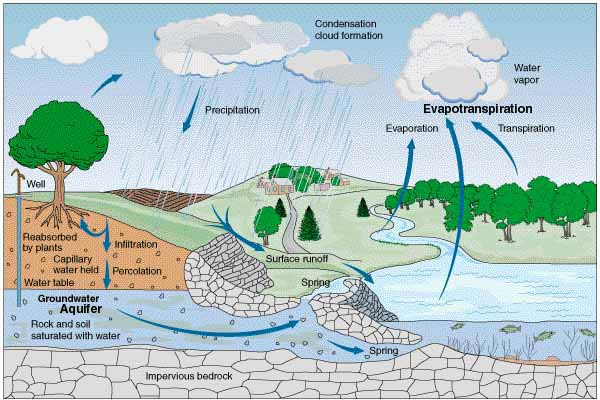 Water and the Hydrologic Cycle